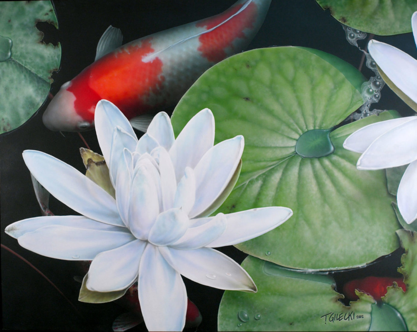 Koi in pond with a large lily