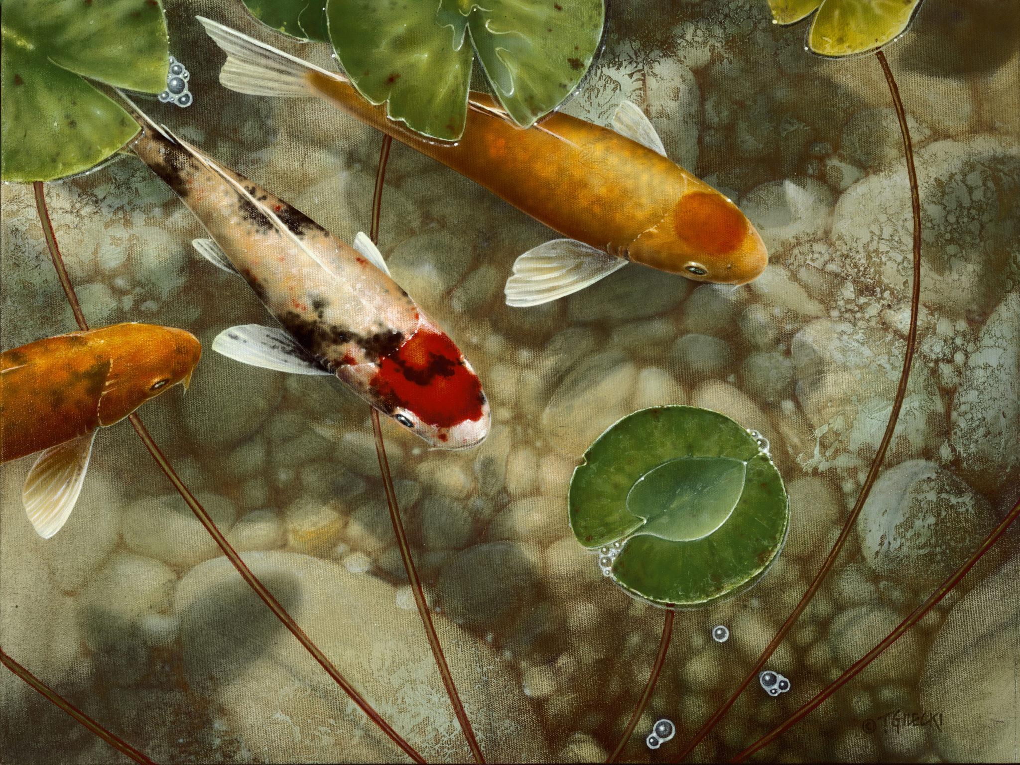 image of koi in pond