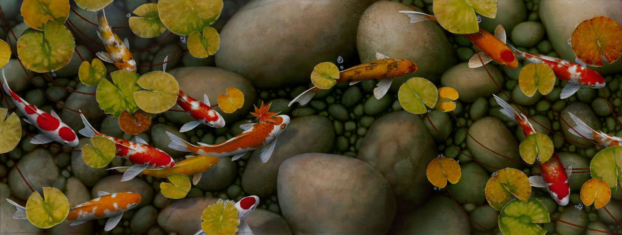 A image of many koi swimming