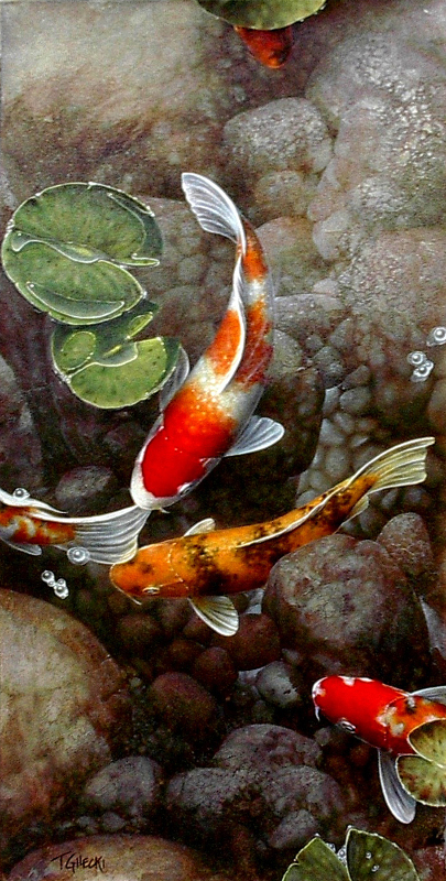 5 koi in rocky pond